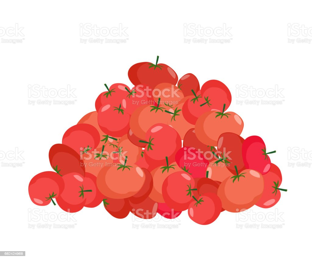 bunch of Tomato. lot of vegetables. big crop on farm royalty-free bunch of tomato lot of vegetables big crop on farm stock vector art & more images of agriculture