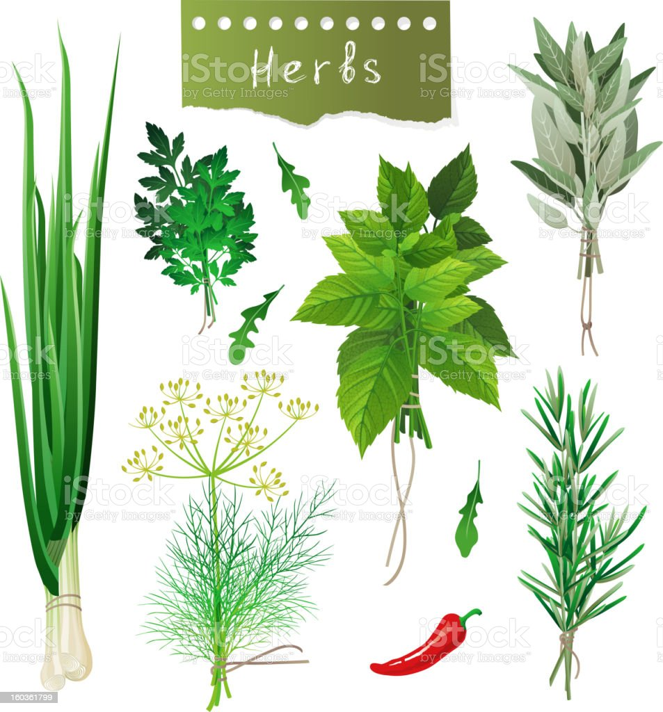 Bunches of different herbs and a chili pepper vector art illustration