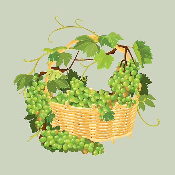 ilustrações de stock, clip art, desenhos animados e ícones de bunches of grapes in basket isolated on beige background. - lian empty