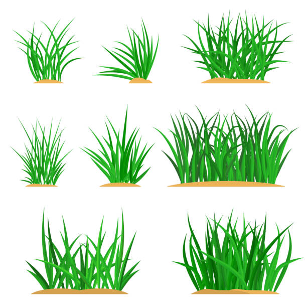 Bunches of green grass set vector art illustration
