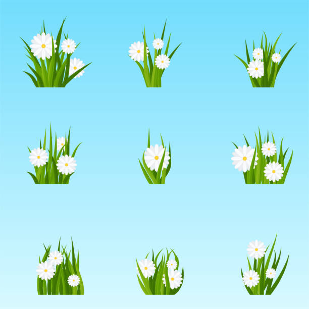 Bunches of green grass with flowers on a meadow or lawn. vector art illustration