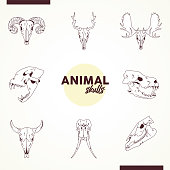 bundle of eight skulls animals heads icons vector illustration design
