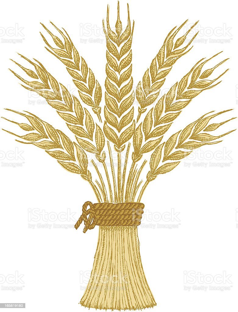Bundle of wheat vector art illustration