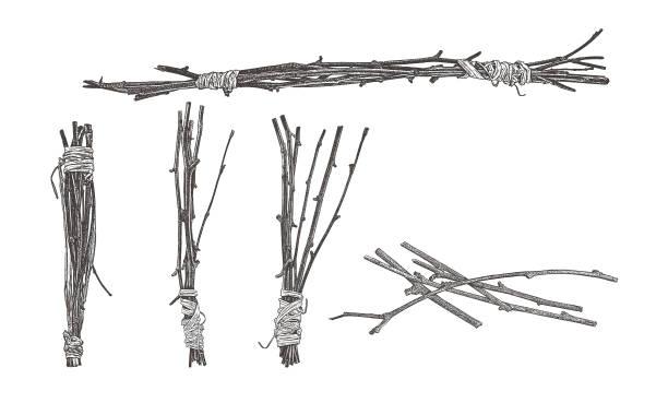 wiązki gałązek owinięte raffią - gałązka stock illustrations