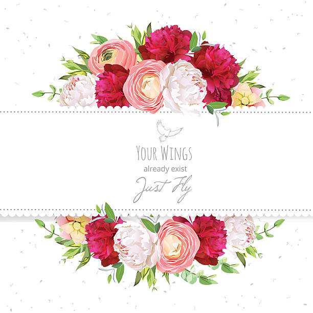 Burgundy red and white peonies, ranunculus, rose vector design frame. Burgundy red and white peonies, pink ranunculus, rose vector design frame. Natural card with dotted backdrop. Delicate floral background. All elements are isolated and editable. temperate flower stock illustrations
