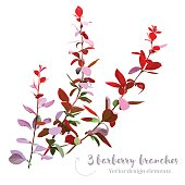 Burgundy red barberry branches vector collection. Modern wedding bouquet greenery. Purple, green tones. Foliage, leaves and stems. Watercolor style set. All elements are isolated and editable.