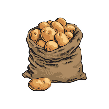 Burlap sack full of ripe potato, hand drawn