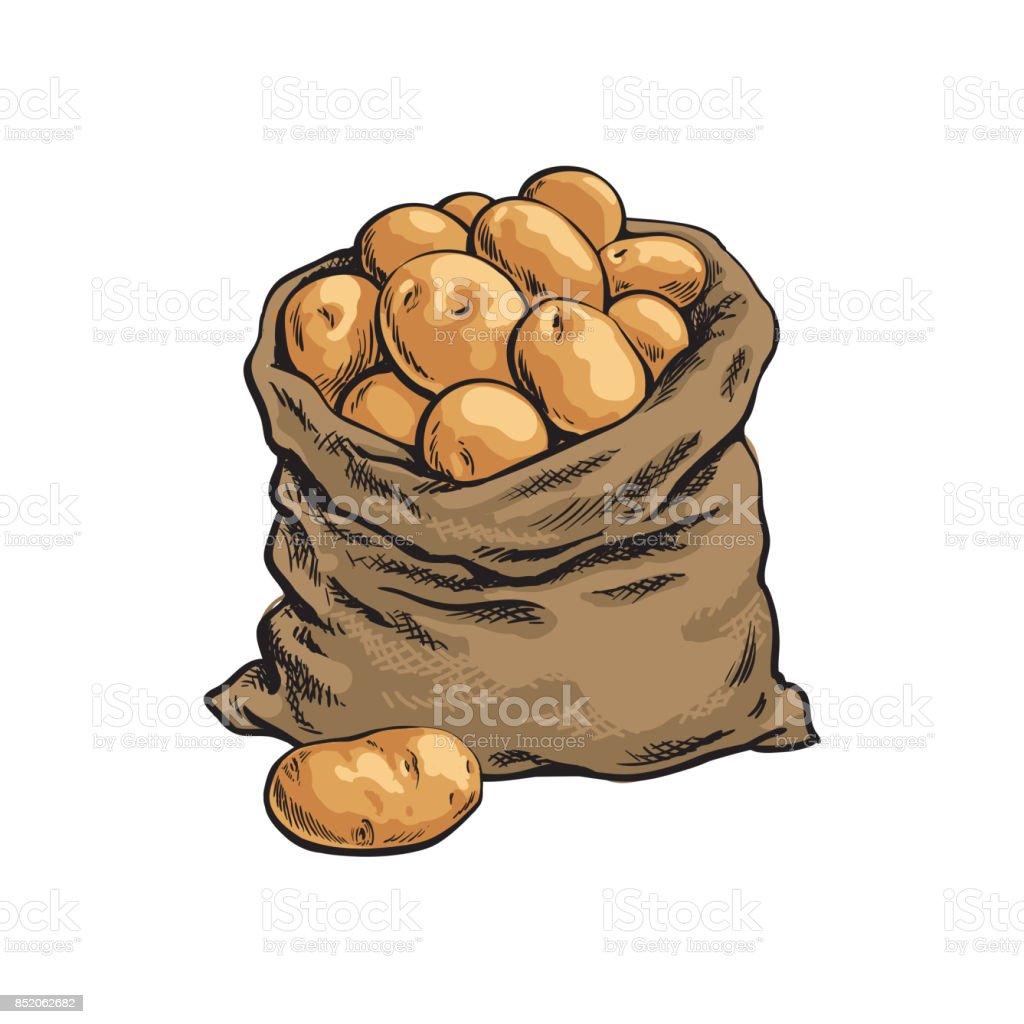 Burlap sack full of ripe potato, hand drawn vector art illustration