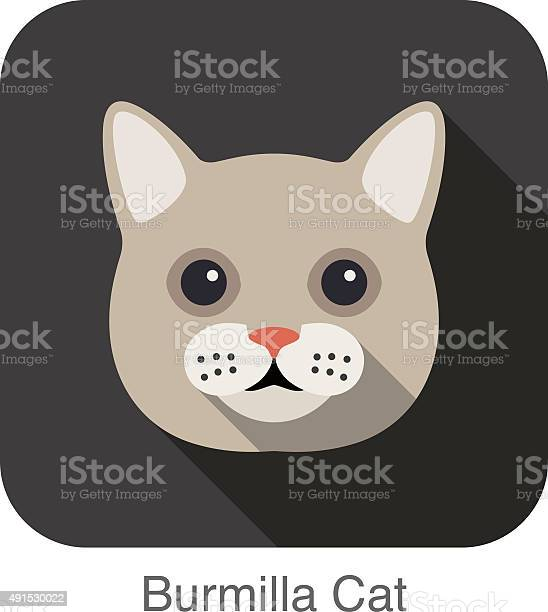Burmilla cat cat breed face cartoon flat icon design vector id491530022?b=1&k=6&m=491530022&s=612x612&h=1eais 6v aon5gdnbpzzoru3zguec as gnnlxj rb4=