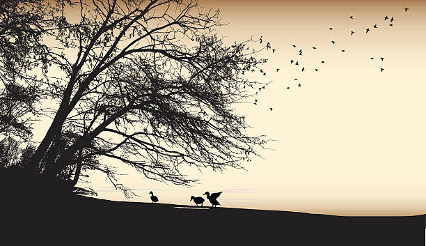 Burned Paper Duck Silhouettes A vector silhouette illustration of an outdoor par scene with ducks along the shoreline of a body of water with a large tree and birds flying above all in a sepia tone. lakeshore stock illustrations