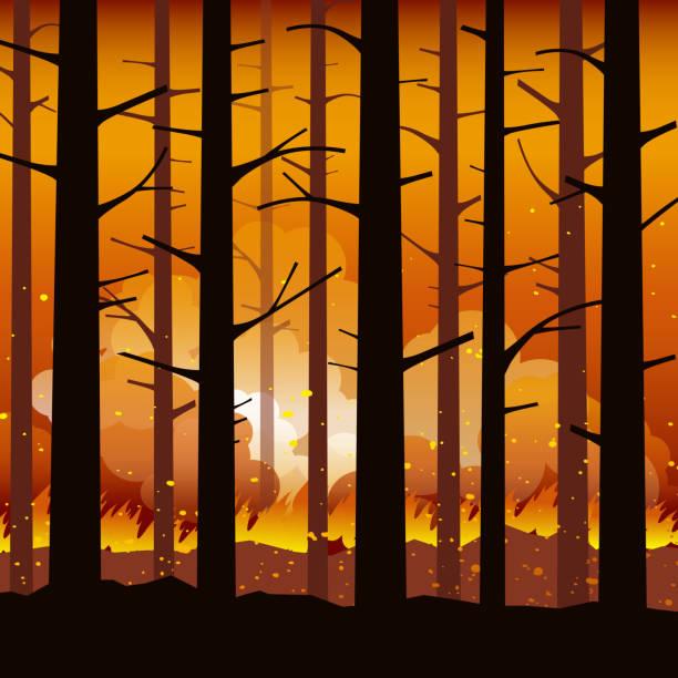 stockillustraties, clipart, cartoons en iconen met brandende bosbrand met verkoolde bomen in silhouet. natuurramp. vectorillustratie. - illustraties van bosbrand