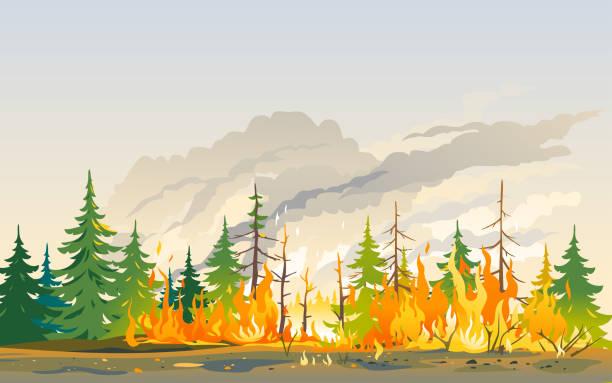 bildbanksillustrationer, clip art samt tecknat material och ikoner med brinnande skogsnatur katastrof landskap - skog brand