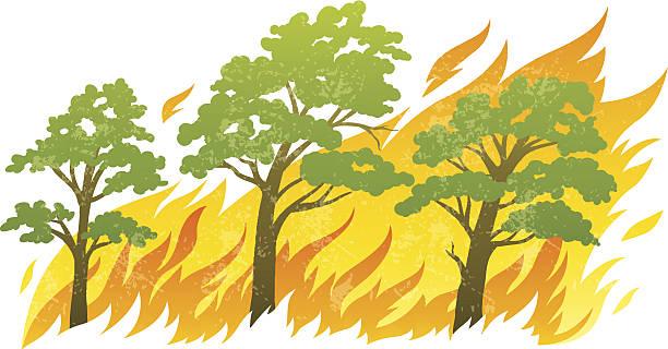 bildbanksillustrationer, clip art samt tecknat material och ikoner med burning forest trees in fire flames - skog brand