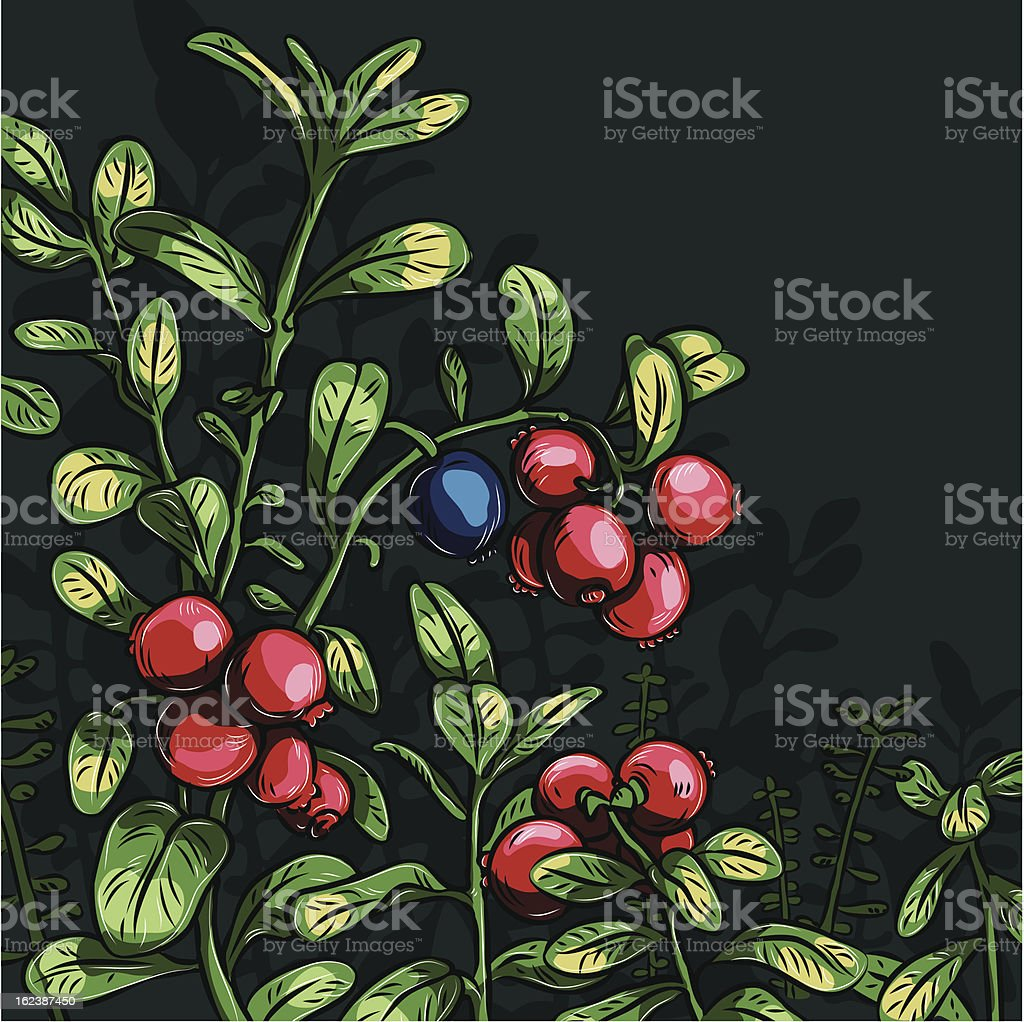 Bush cowberry royalty-free stock vector art