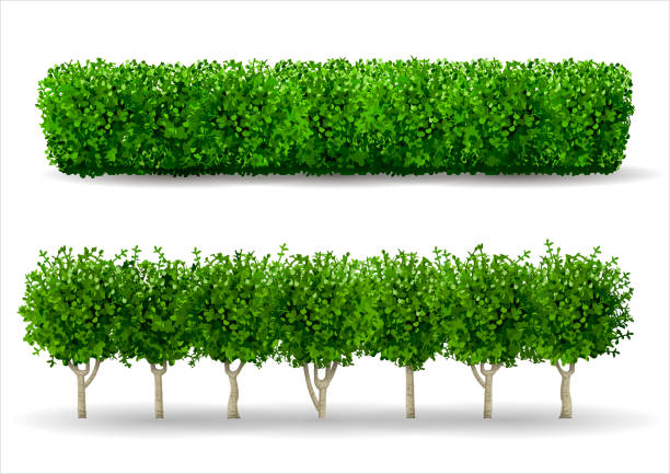 bush in the form of a green hedge - куст stock illustrations