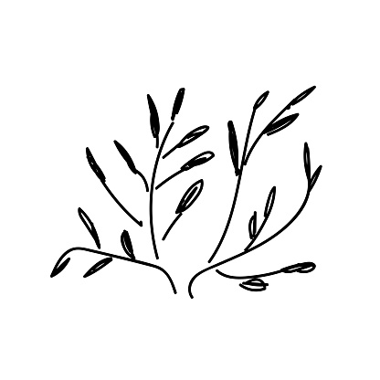 bush isolated. grass. handwritten vector stylized bush on white background. doodle grass. stylized grass. grass ink. herb logo. handwritten bush grass on a white background.