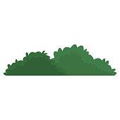 istock Bush isolated symbol 899068758
