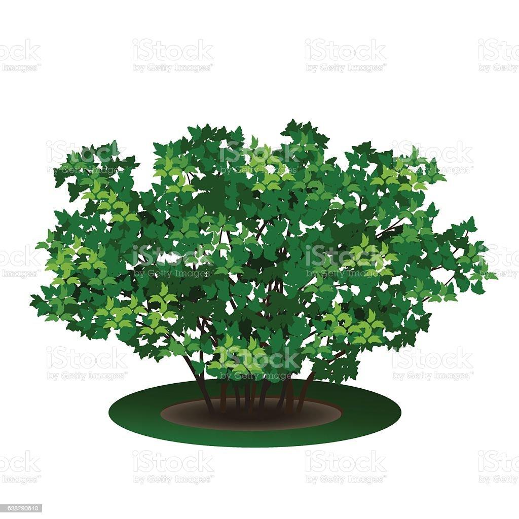 bush com folhas verdes e Sombra - ilustração de arte em vetor