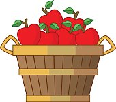 A vector illustration of a bushel of apples in color. The red apples are harvested in the autumn and are placed in an antique country wooden basket with handles.