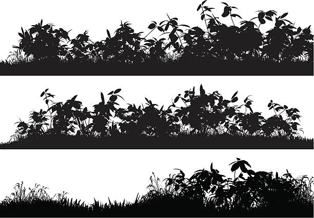 Bushes, Grass - Illustration vectorielle