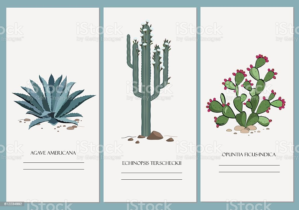 Business cards set with cactus, agave, and prickly pear plant. - ilustración de arte vectorial