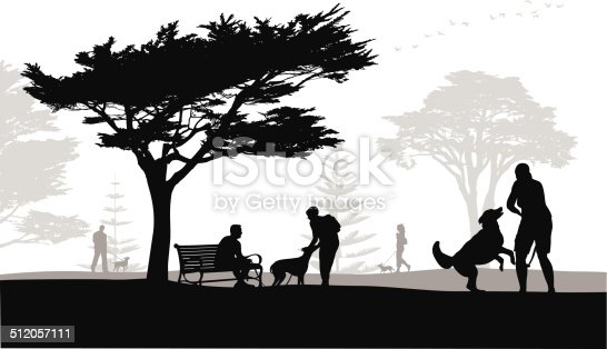 dog park with California Cypress tree