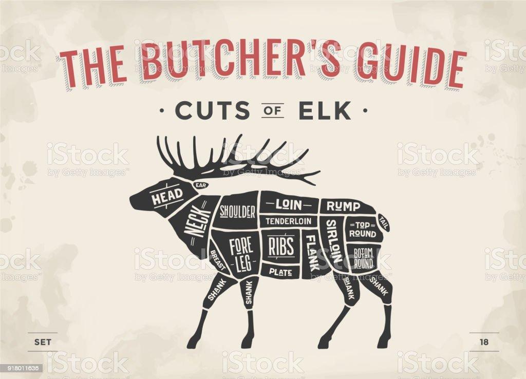 Butcher Diagram Scheme Elk Stock Vector Art & More Images of Animal ...