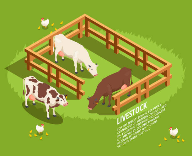 butcher shop butchery isometric composition Livestock including cows in paddock, hens with chicks on pasture isometric composition on green background vector illustration paddock stock illustrations