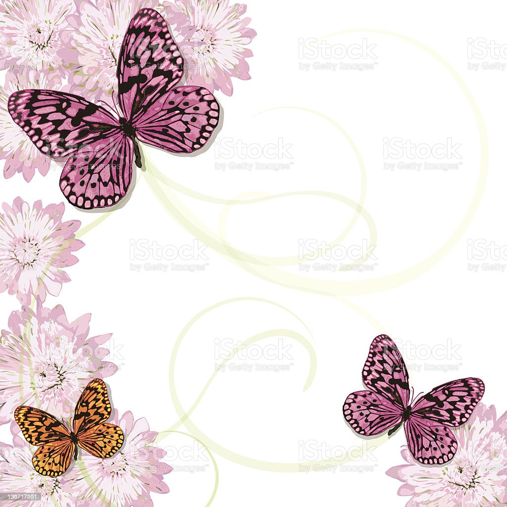 Butterflies and pink daisy frame Invitation royalty-free stock vector art