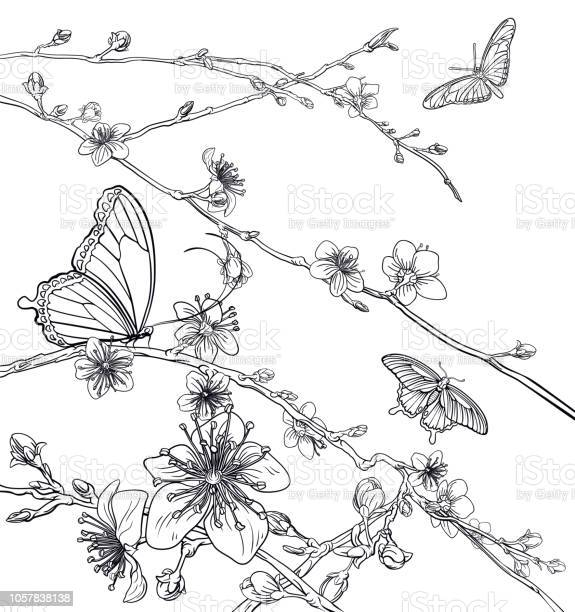 Butterflies cherry peach blossom flowers vector id1057838138?b=1&k=6&m=1057838138&s=612x612&h=umsfcju bqiqqn3hzxu 1n8o7 xgunvx8gelcjewuqs=