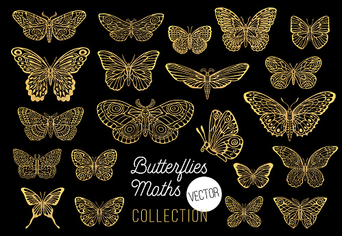 Butterflies drawing vector set, isolated, sketch style collection insert wings emblem