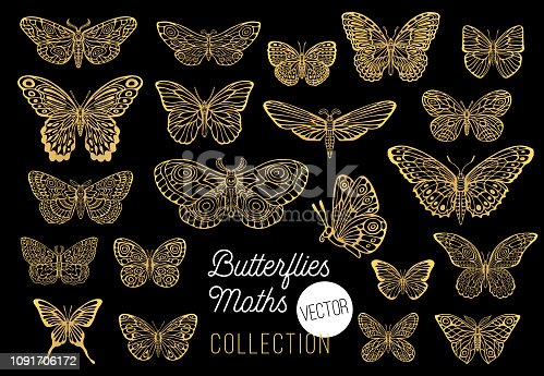 Butterflies drawing vector set, isolated, sketch style collection insert wings emblem symbols, golden, gold, black background. Hand drawn vector illustration.