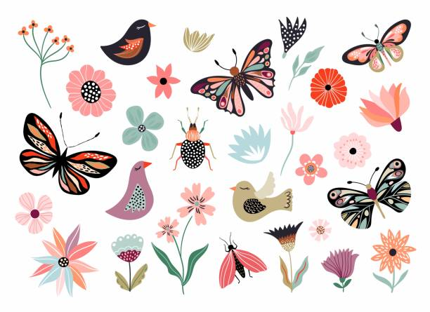 Butterflies, flowers and birds hand drawn collection Butterflies, flowers and birds hand drawn collection of different element, isolated on white flower head stock illustrations