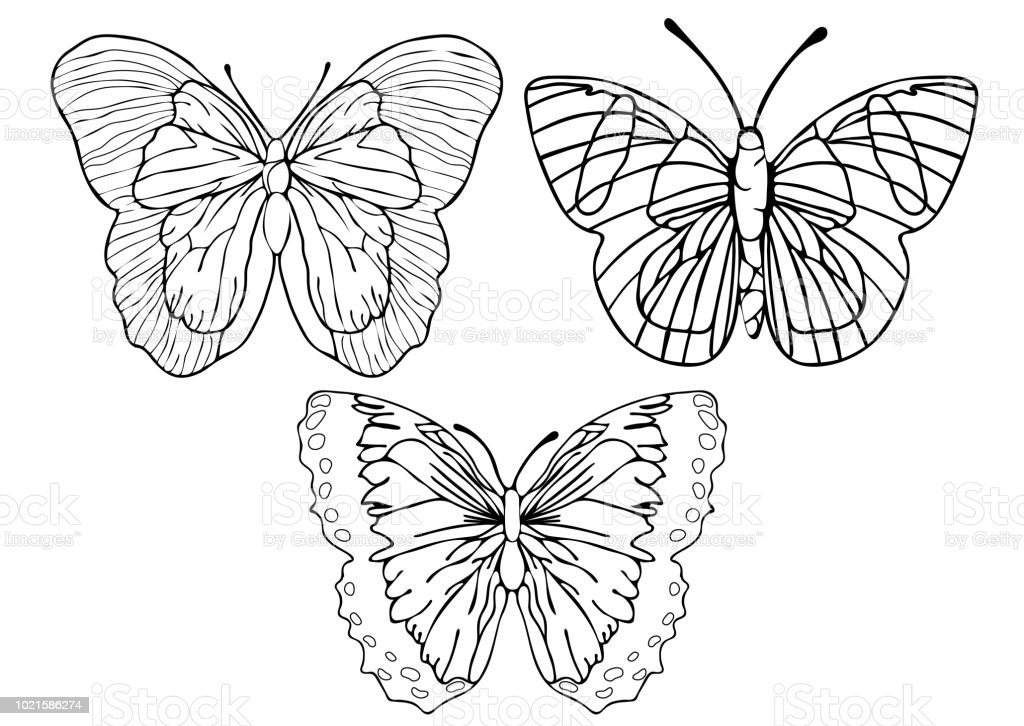 Kelebekler Anahat Set Boyama Dogrusal Cizim Siluet Kroki Kontur