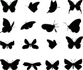 vector file of  butterflies silhouette