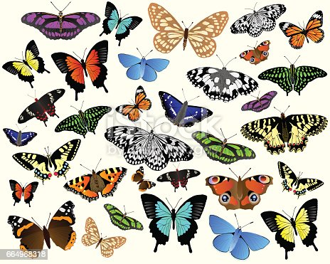 Colorful vector butterflies from around the world.
