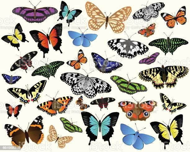 Butterflies vector id664968318?b=1&k=6&m=664968318&s=612x612&h=0okthomvzkui36haesh5yjownp0 v9xlrqzvzf2ejhc=