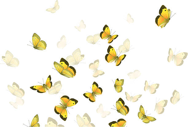 Butterflies  swarm of insects stock illustrations