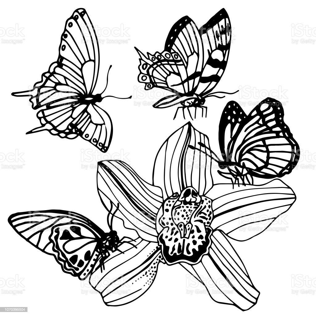 Vetores De Erva De Borboleta E Flor Floral Mão Doodle
