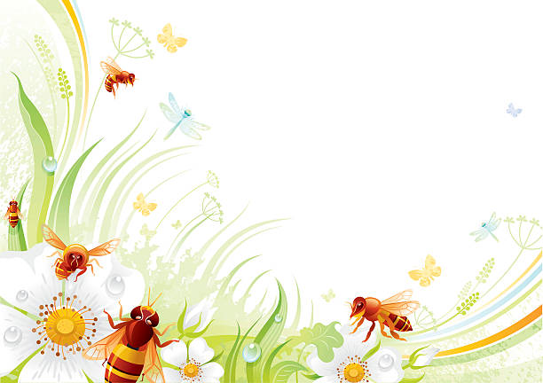 Butterfly background with copyspace: bees and wild roses Butterfly background with beautiful swirls, leafs, blue dragonflies.  bee borders stock illustrations