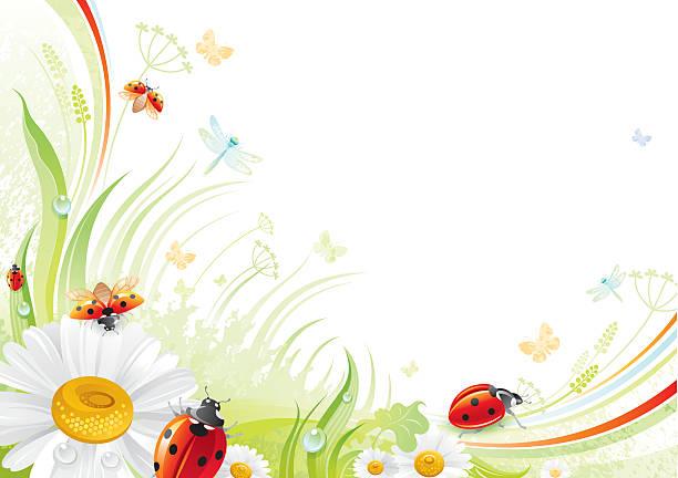 Motyl tło z copyspace: Biedronka i daisy – artystyczna grafika wektorowa