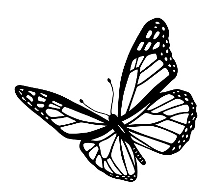Butterfly black and white tribal tattoo cut out silhouette