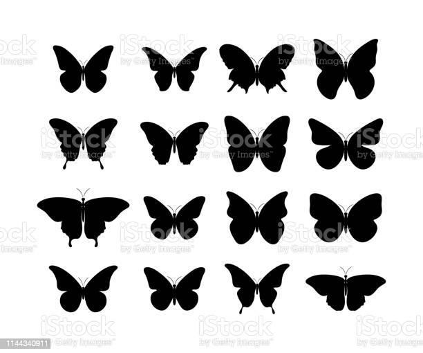 Butterfly black icons collection black butterflies isolated black vector id1144340911?b=1&k=6&m=1144340911&s=612x612&h=rfskimfrhdk6ucgqqqmsdpwxvyujcnwdz8cr4caqg9e=