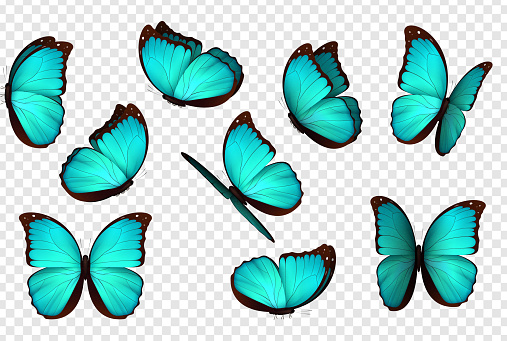 Butterfly blue vector illustration. clipart