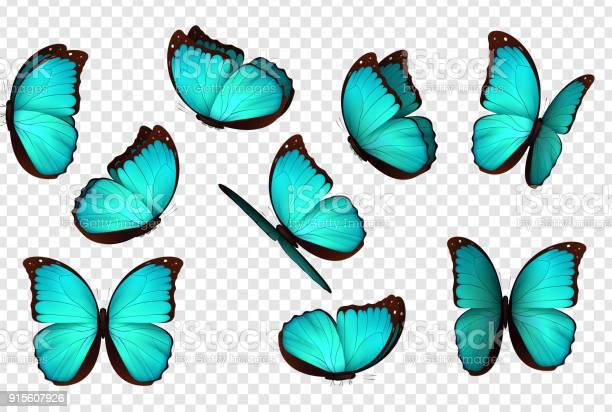 Butterfly blue vector illustration vector id915607926?b=1&k=6&m=915607926&s=612x612&h=zeuvveufzcxrcomyg1ubcxbmgveonh6o3shcata e28=