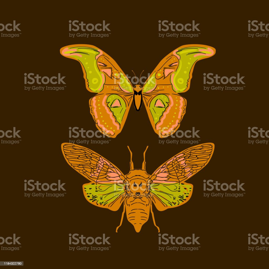 Butterfly Cicadas Sketch Yellow Orange Mustard Olive Green Contour On Dark Brown Background Simple Art Can Be Used For Gift Wrap Fabrics Wallpapers Vector Stock Illustration Download Image Now Istock