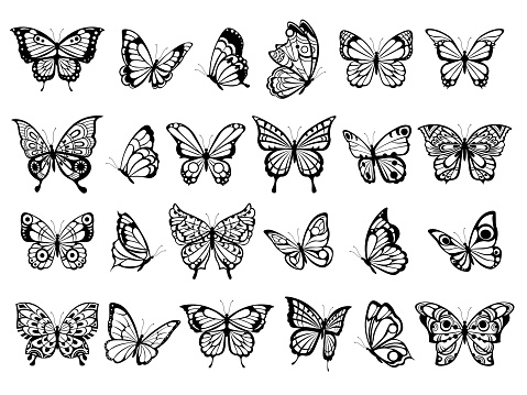 Butterfly collection. Beautiful nature flying insect drawing, exotic black butterflies with funny wings vector pictures clipart