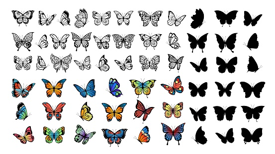 Butterfly collection. Drawing butterflies, silhouette and color flying insects. Spring animals, wild meadow or forest characters vector set