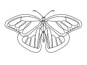 Butterfly Continuous Line Vector
