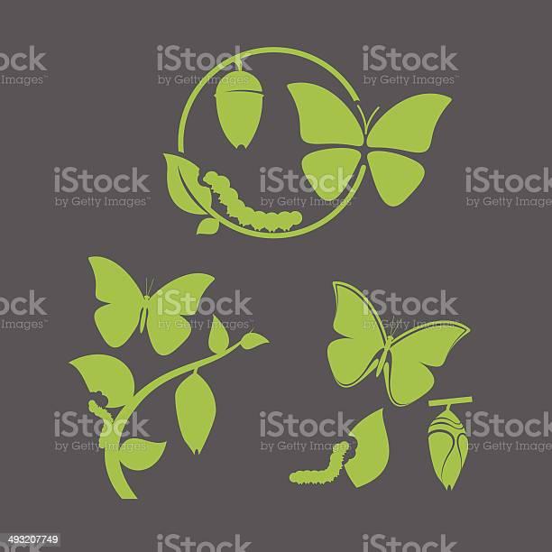 Butterfly cycle vector id493207749?b=1&k=6&m=493207749&s=612x612&h=ynasyiuqsw8thw0c36cny5krtx6woedlcuu3aew5f3e=